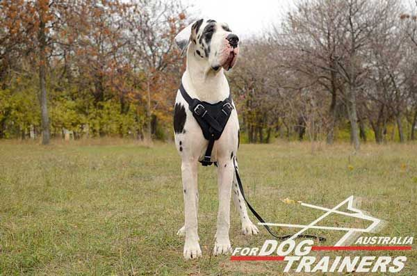 Demandable Great Dane-Breed-Leather-Dog-Harness-Attack-Training