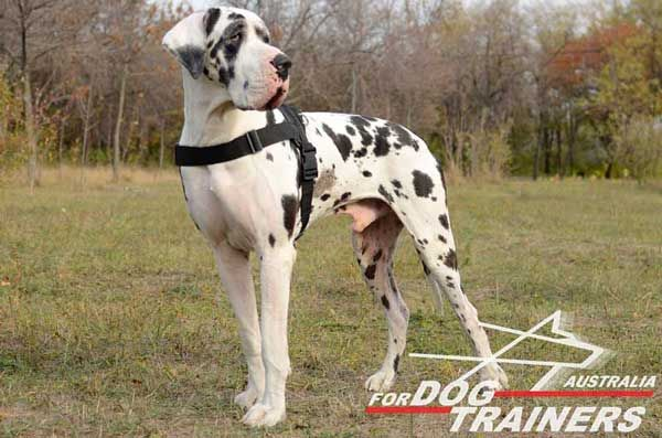Lightweight Pulling Nylon Dog Harness for Great Danes