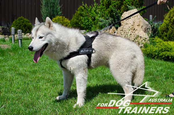 Husky harness nylon for training without pulling