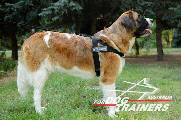 Moscow Watch Dog harness nylon equipped with changable id patch