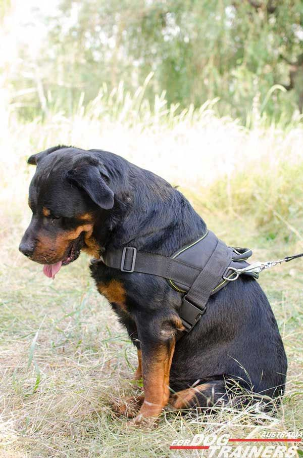 Hand crafted Lightweight Nylon Canine Harness for Rottweilers