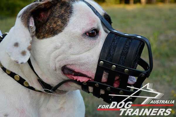 American Bulldog Leather Basket Muzzle Nappa Padded