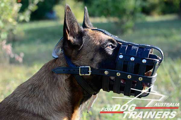Belgian Malinois Leather Basket Muzzle Nappa Padded