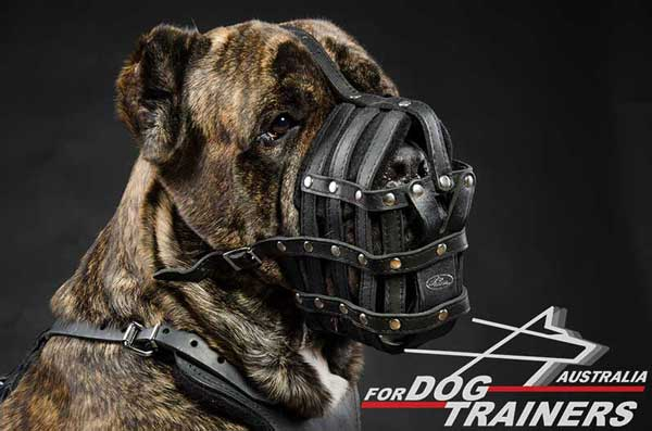 Cane Corso Leather Basket Muzzle Solid Hardware