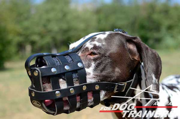 Dalmatian Leather Basket Muzzle Breathable Padded