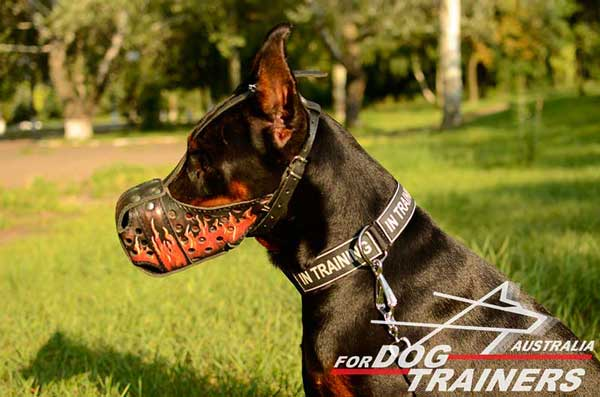 Doberman leather muzzle with holes for good ventilation