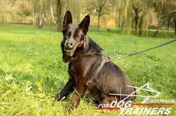 German Shepherd Leather Basket Muzzle Easy Regulated