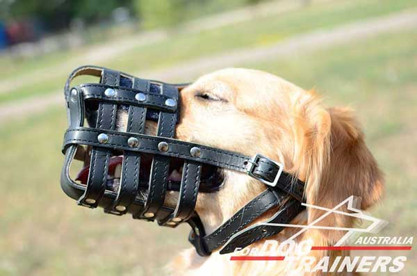 Golden Retriever Leather Basket Muzzle Reliably Stitched