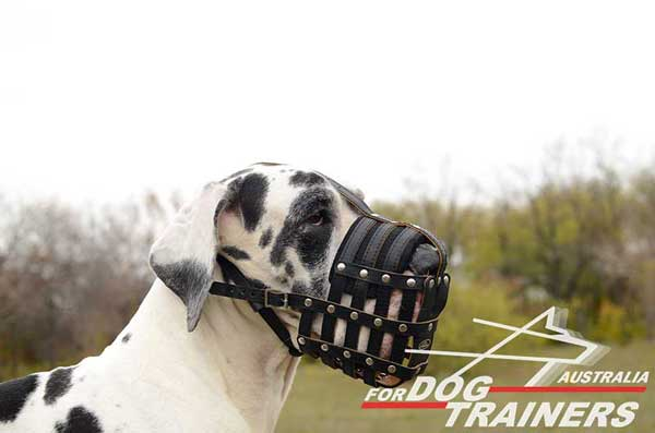 Great Dane Leather Basket Muzzle Hand Riveted