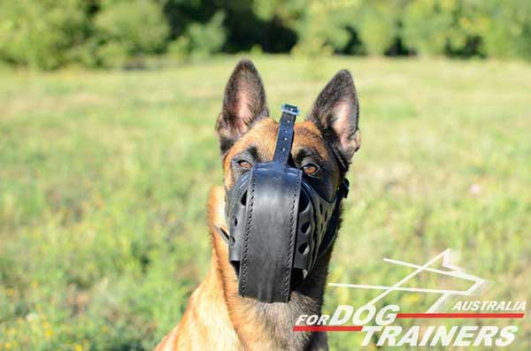 Leather Belgian Malinois Muzzle for Training and Walking