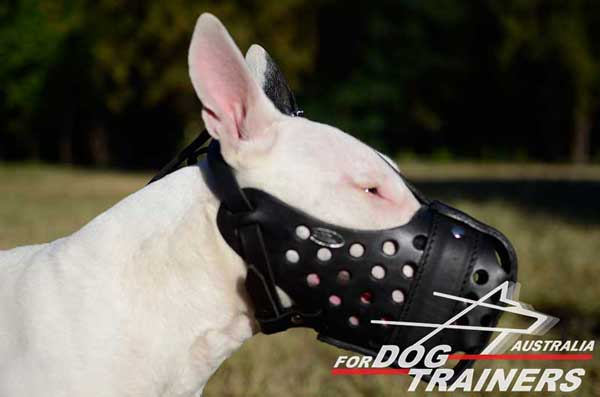 Leather Bull Terrier Muzzle of Reliable Quality