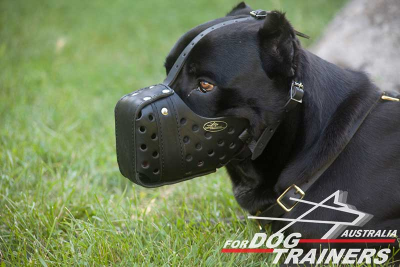 Where Can I Buy A Dog Muzzle
