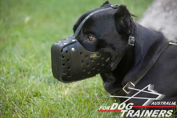 Leather Cane Corso Muzzle for Agitation Training