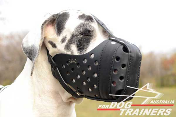 Leather Great Dane Muzzle for Agitation Work