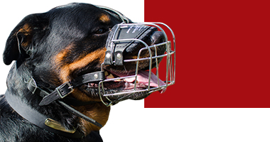 Choose right muzzle for dog in Canada