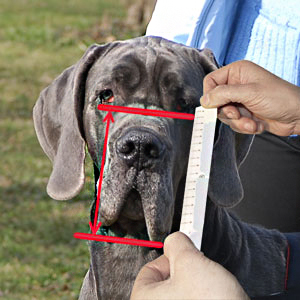 How to measure your Big Dog