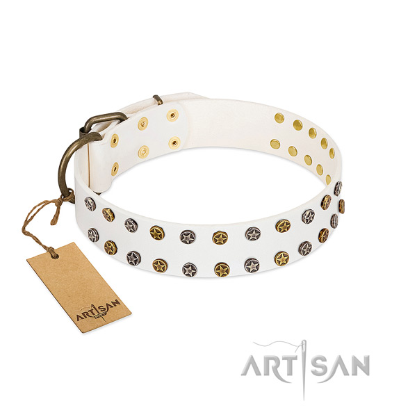 Amazing leather dog collar with strong adornments