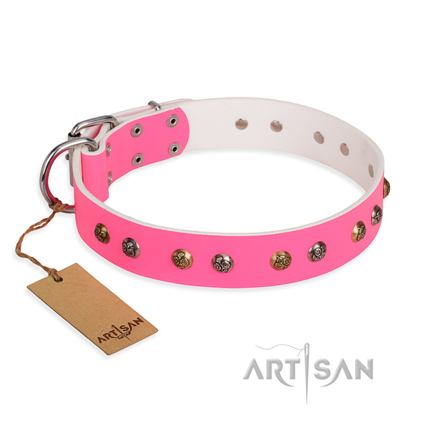 Everyday use impressive dog collar with rust resistant D-ring