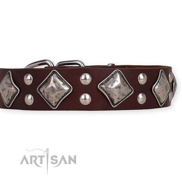 Full grain genuine leather dog collar with trendy corrosion proof adornments
