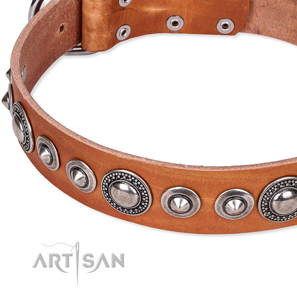 Daily use studded dog collar of top notch full grain natural leather