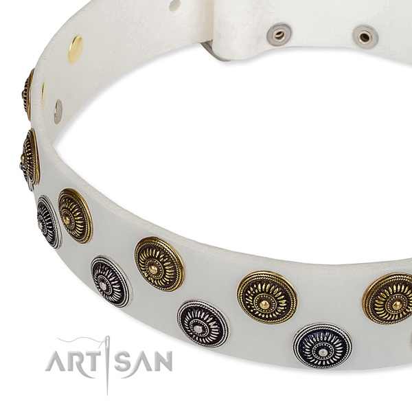 Walking embellished dog collar of quality full grain natural leather