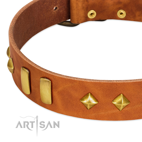 Everyday use full grain genuine leather dog collar with stylish embellishments