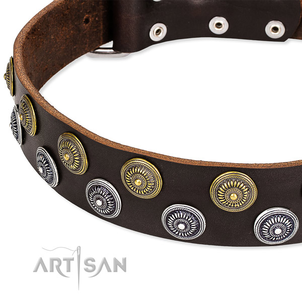 Everyday use studded dog collar of finest quality leather
