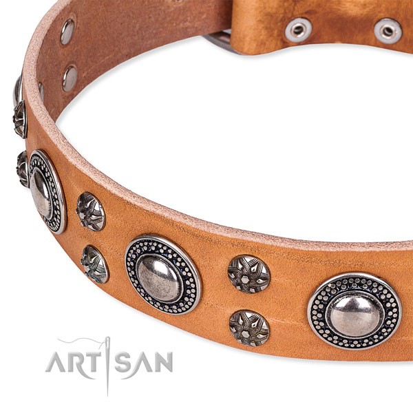 Everyday walking decorated dog collar of top quality leather