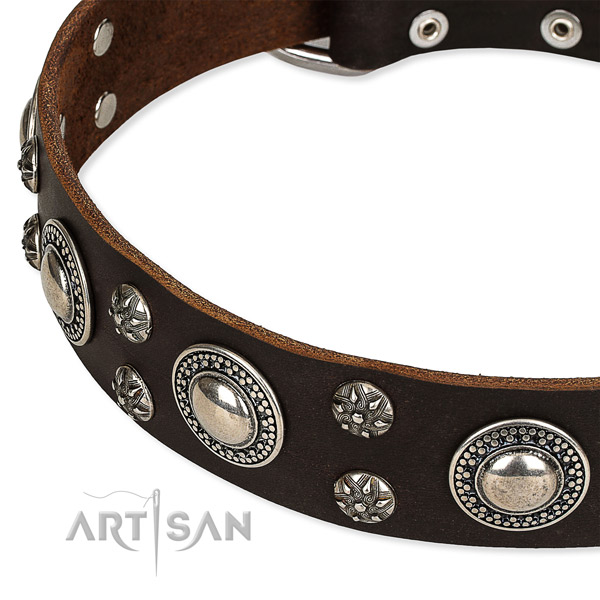 Everyday walking studded dog collar of quality natural leather