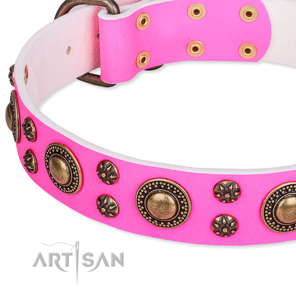 Daily walking adorned dog collar of quality full grain leather