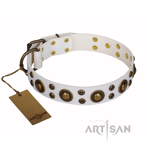 Basic training dog collar of top quality full grain genuine leather with studs
