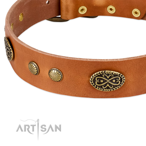Corrosion resistant adornments on full grain genuine leather dog collar for your four-legged friend