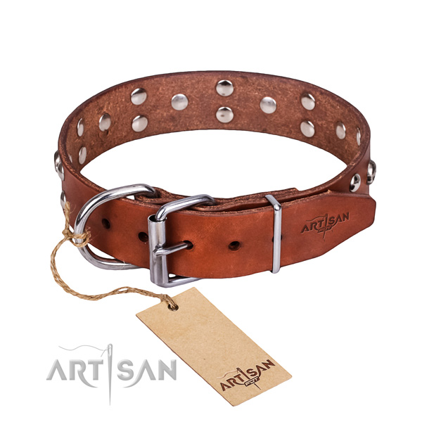 Stylish walking dog collar of top notch full grain leather with embellishments