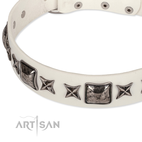 Fancy walking studded dog collar of quality full grain leather