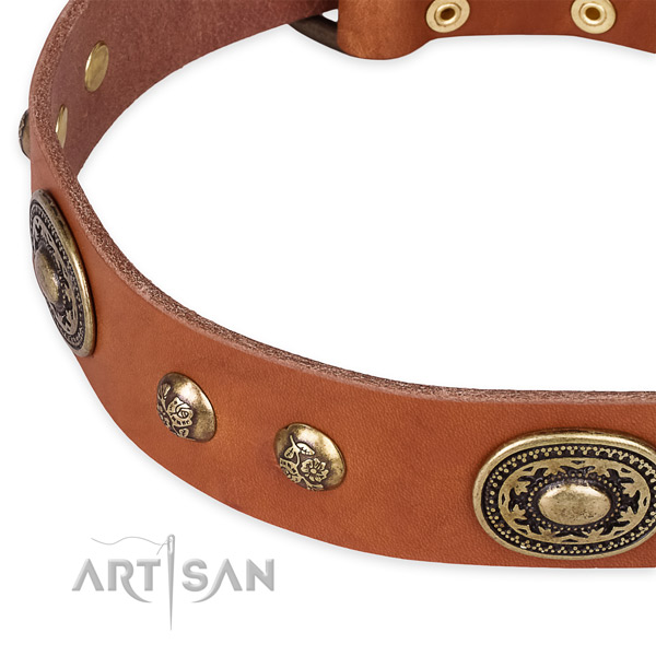 Adorned leather collar for your attractive four-legged friend