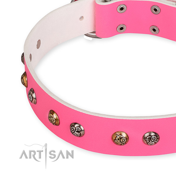 Genuine leather dog collar with extraordinary corrosion resistant studs