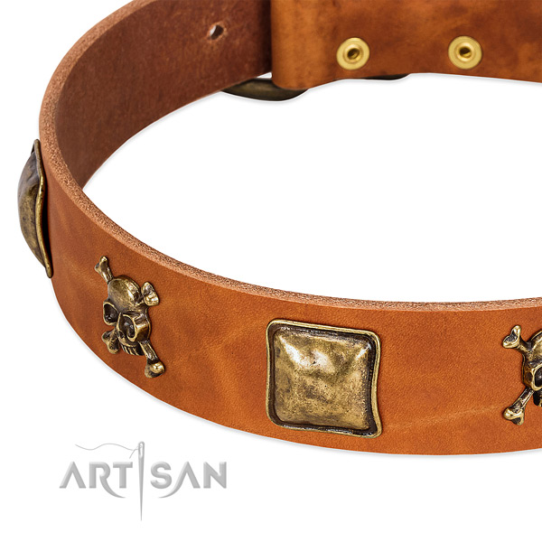 Incredible full grain natural leather dog collar with durable studs