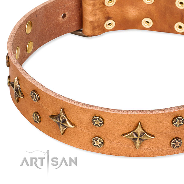 Basic training adorned dog collar of fine quality full grain leather