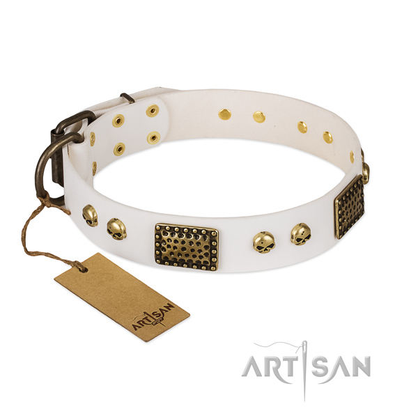 Corrosion proof D-ring on everyday walking dog collar