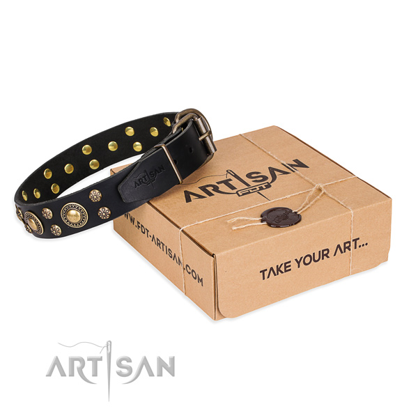 Fancy walking dog collar of durable genuine leather with embellishments