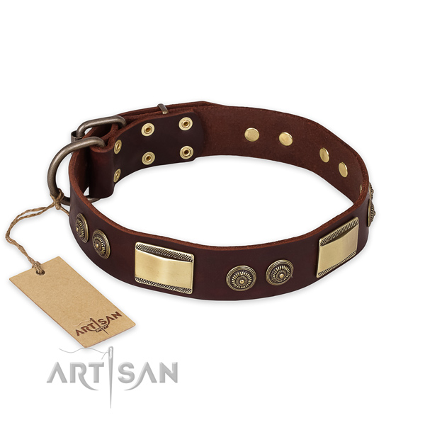 Unusual leather dog collar for everyday use