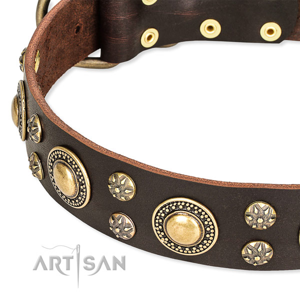 Stylish walking adorned dog collar of top notch full grain natural leather