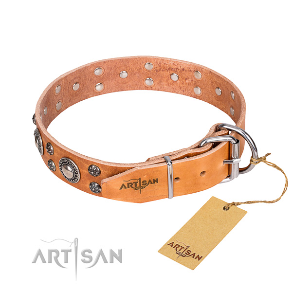 Walking embellished dog collar of top quality full grain genuine leather
