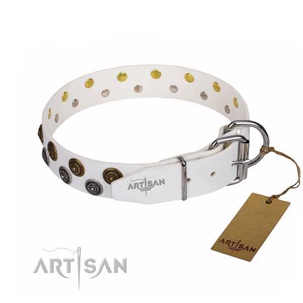 Walking embellished dog collar of top notch natural leather