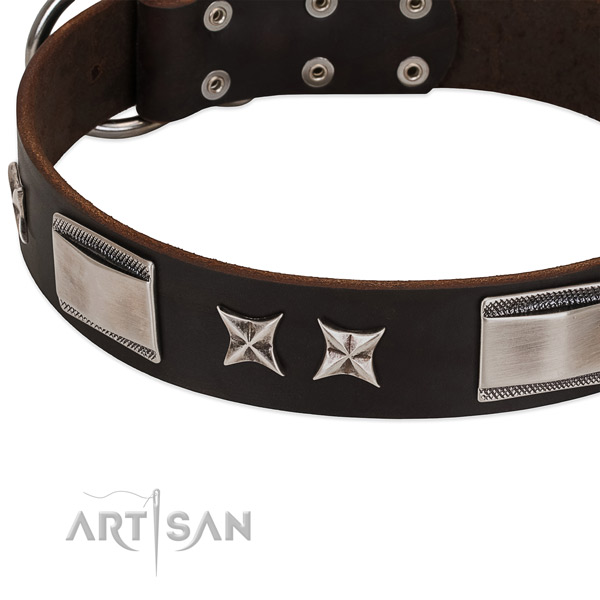 Adorned collar of leather for your handsome four-legged friend