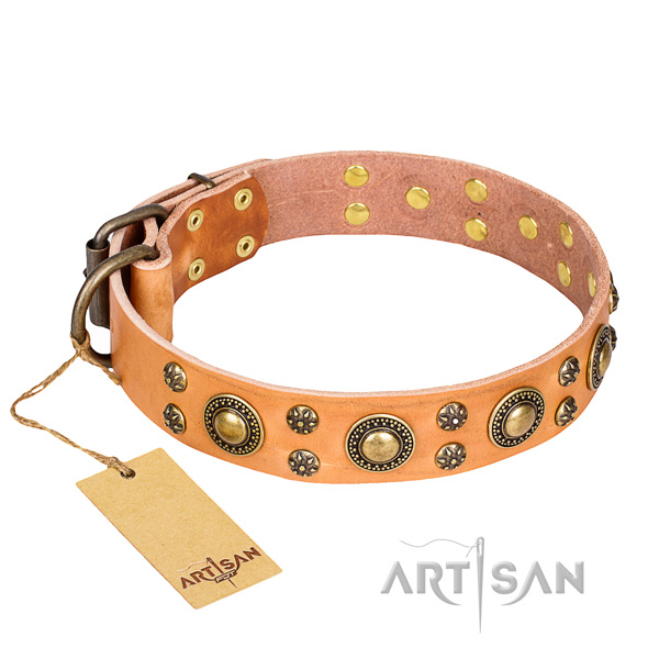 Stylish walking dog collar of quality full grain natural leather with adornments