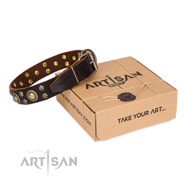 Stylish walking dog collar of quality leather with embellishments