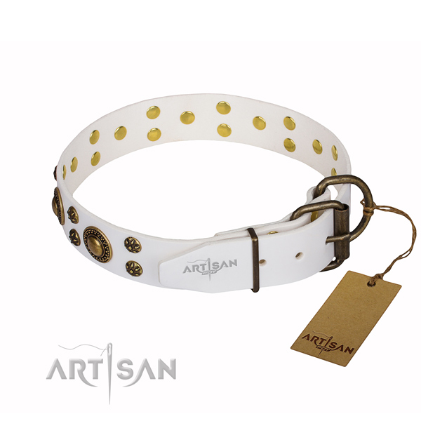 Everyday walking studded dog collar of best quality full grain leather