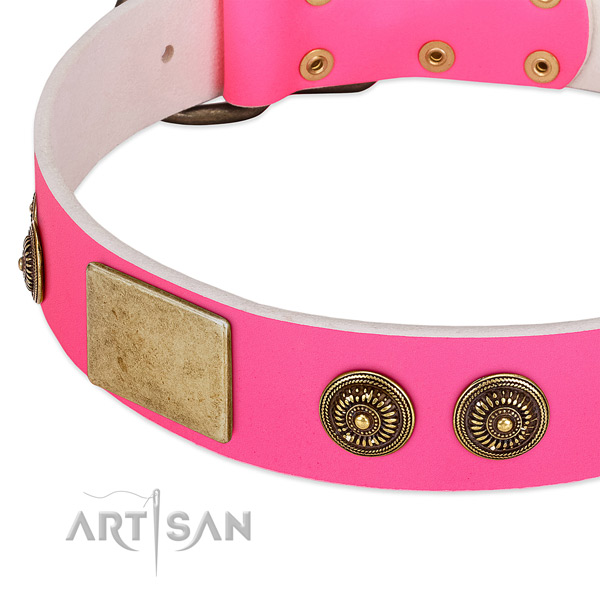Amazing dog collar made for your attractive dog