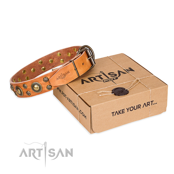 Stylish walking dog collar of quality full grain natural leather with studs